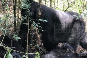 5 Days Adventure & Congo Safari in Congo to Virunga