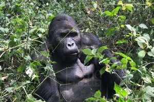 5 Days Adventure & Congo Safari in Congo to Virunga