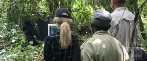 1 day gorilla trekking safari in Congo Virunga national park