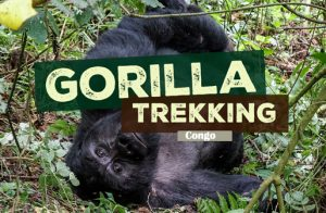 Gorilla Trekking in Virunga National Park