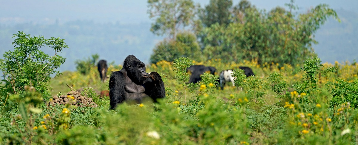VIRUNGA NATIONAL PARK CONGO