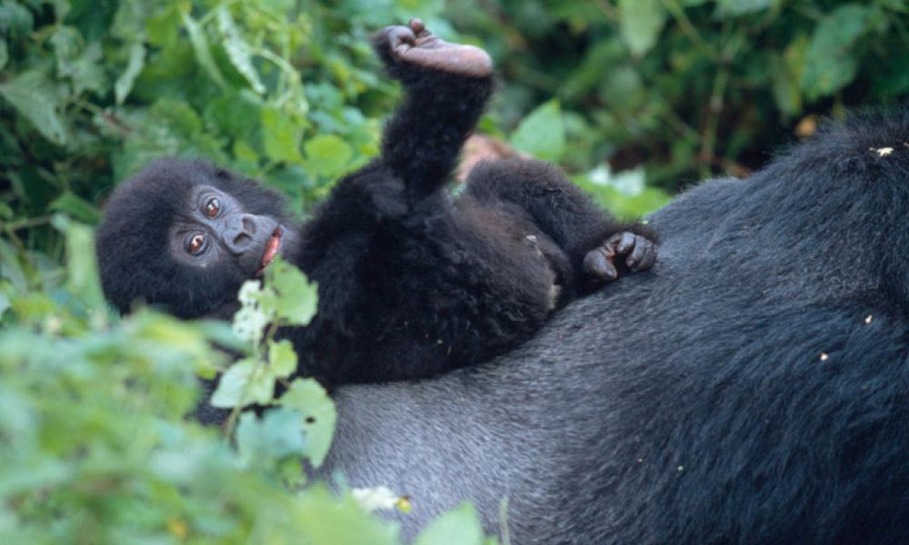 virunga national park congo drc