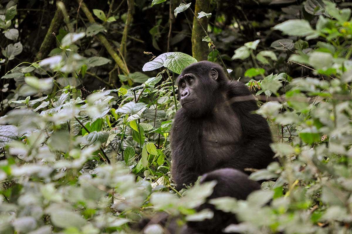 about virunga national park congo