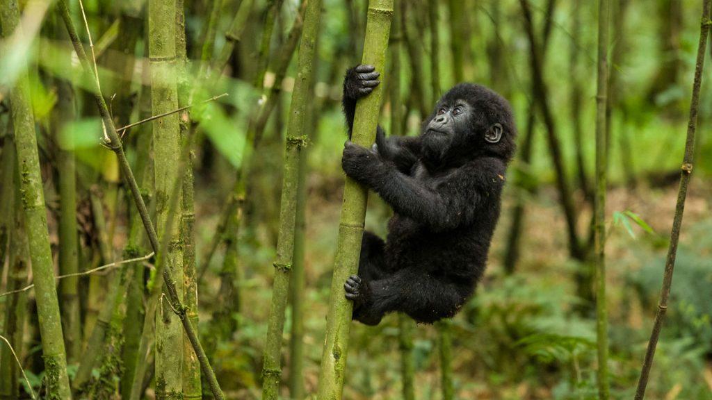 Safari Activities in Virunga National Park Congo