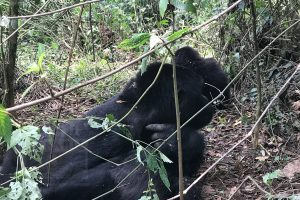 attraction in Virunga National Park