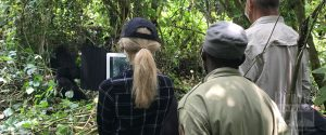 How to get your Congo Gorilla Trekking permit -Congo Safari News