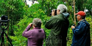 Birding in Virunga National Par
