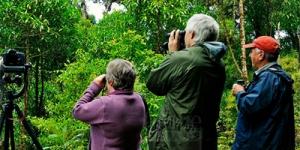 Birding in Virunga National Par