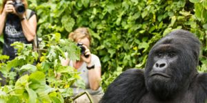 Gorilla Trekking Virunga National Park
