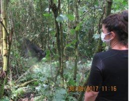 GORILLA TREKKING IN VIRUNGA NATIONAL PARK