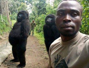 Orphaned Gorillas pose for selfie with anti-Poaching rangers in Congo -Congo Safari News