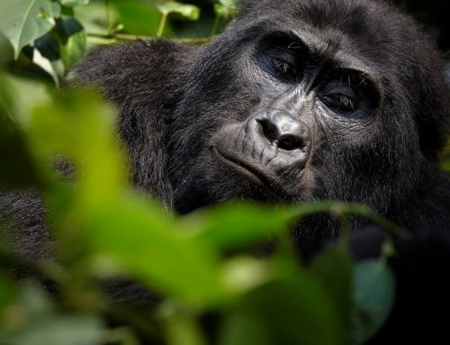 Popular Congo safari activities; Best Place and how they do it
