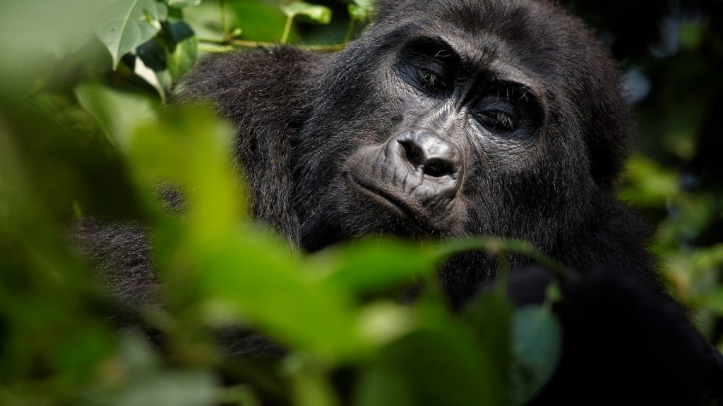 about virunga national park congo