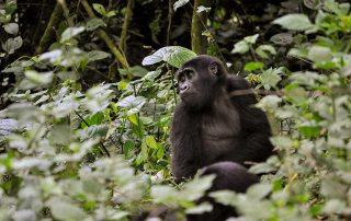 Activities in Virunga National Park – Congo Safari News