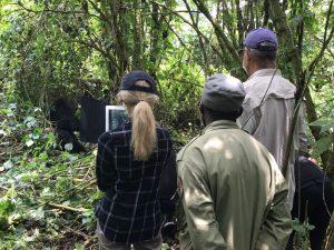 Congo Gorilla Trekking Rules